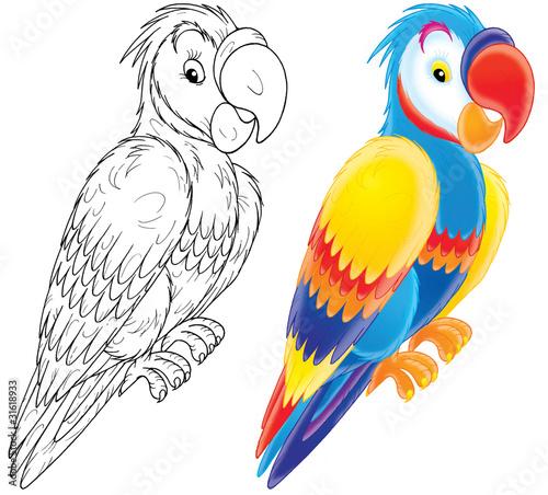 papuga-szablon-i-rysunek-do-pokolorowania
