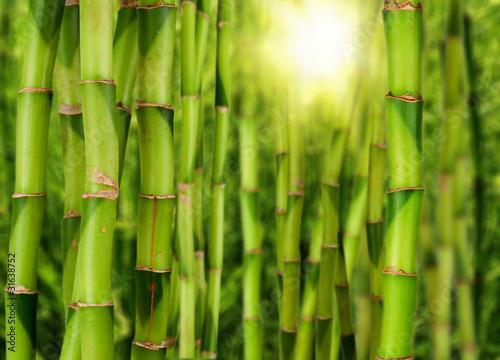 Foto-Schiebegardine ohne Schienensystem - Bambuswald (von Visions-AD)