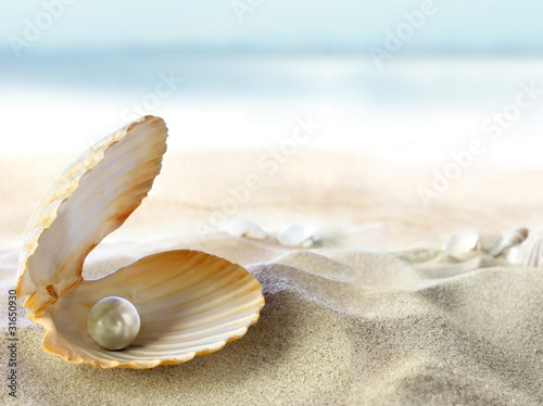 Photo  Shell with a pearl
