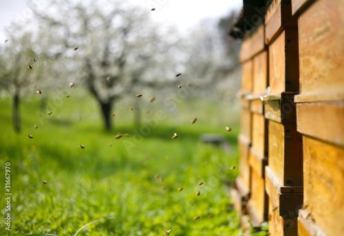Bienen vor ihrem Bienenstock in einer Obstwiese