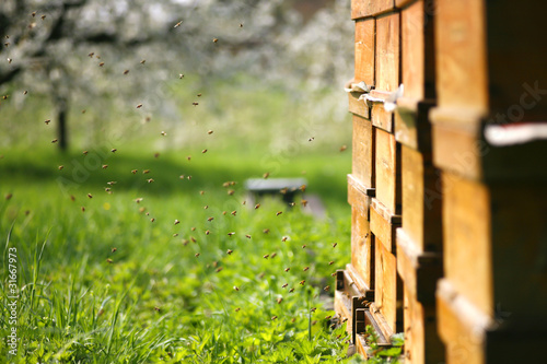 Garden Poster Birch Grove Bienenschwarm vor ihrem Stock in einer Obstwiese
