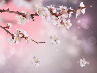 NaklejkaSpring Blossom Design
