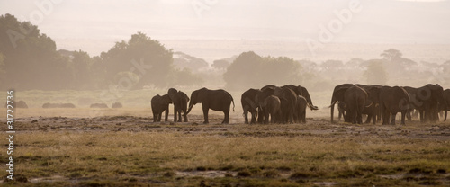 Elephants, Amboseli National Park