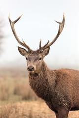 Fototapetabeautiful deer