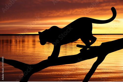 Silhouette of leopard on branch on sunset background