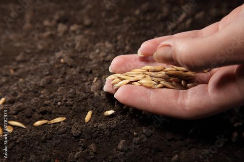 Obraz na plátně sowing seed