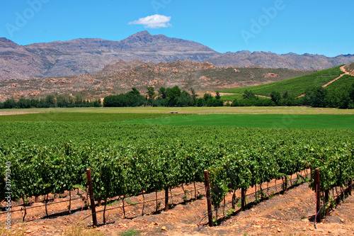 Deurstickers Zuid Afrika vineyard