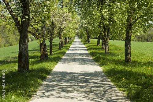 Spoed Foto op Canvas Weg in bos Baumallee