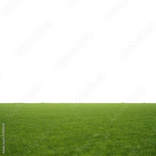Fototapety, obrazy: 芝生