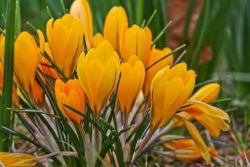 Obraz na Szkle Kwiaty Group