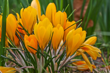 Fototapeta Kwiaty Group