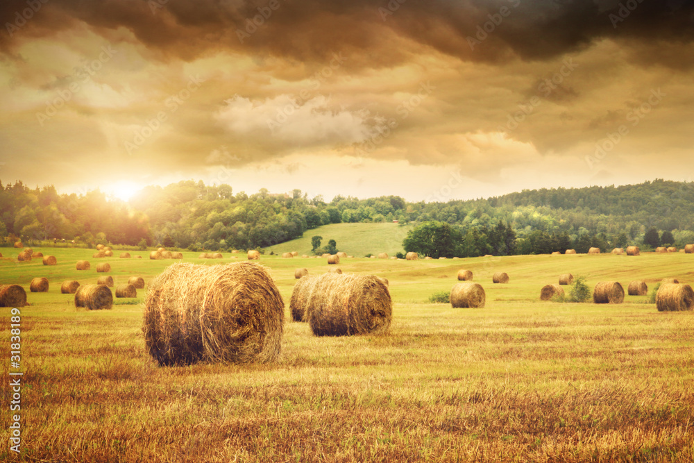 Fototapeta Field of freshly bales of hay with beautiful sunset
