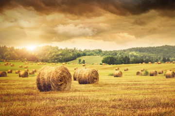 Fototapeta Wiejski Field of freshly bales of hay with beautiful sunset