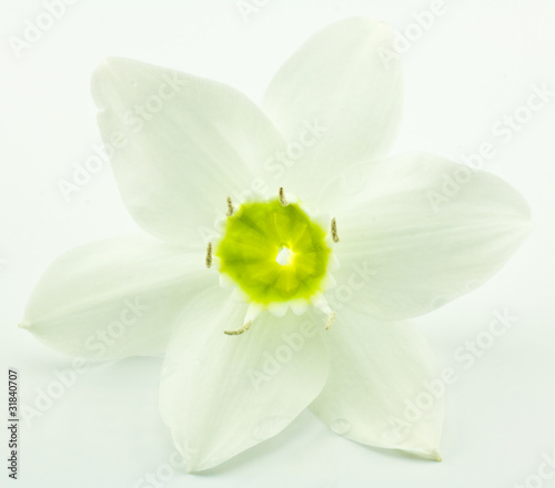 Fleur Blanche Du Lys De La Vierge Buy This Stock Photo And Explore