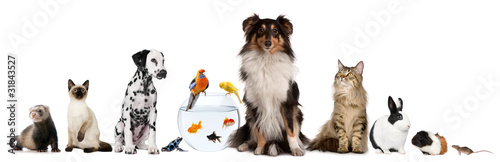 Chat Group of pets sitting in front of white background