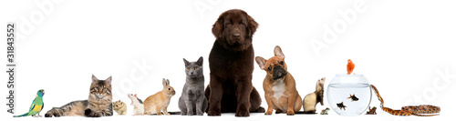 Group of pets sitting in front of white background #31843552