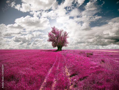 oniric landscape and tree - 31846584