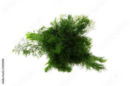 Garden Poster Plant Bunch of green dill on white background.