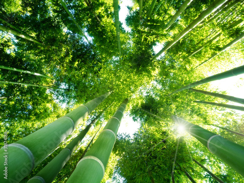 Photo bamboo forest