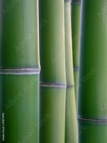 In de dag Bamboo bamboo reeds