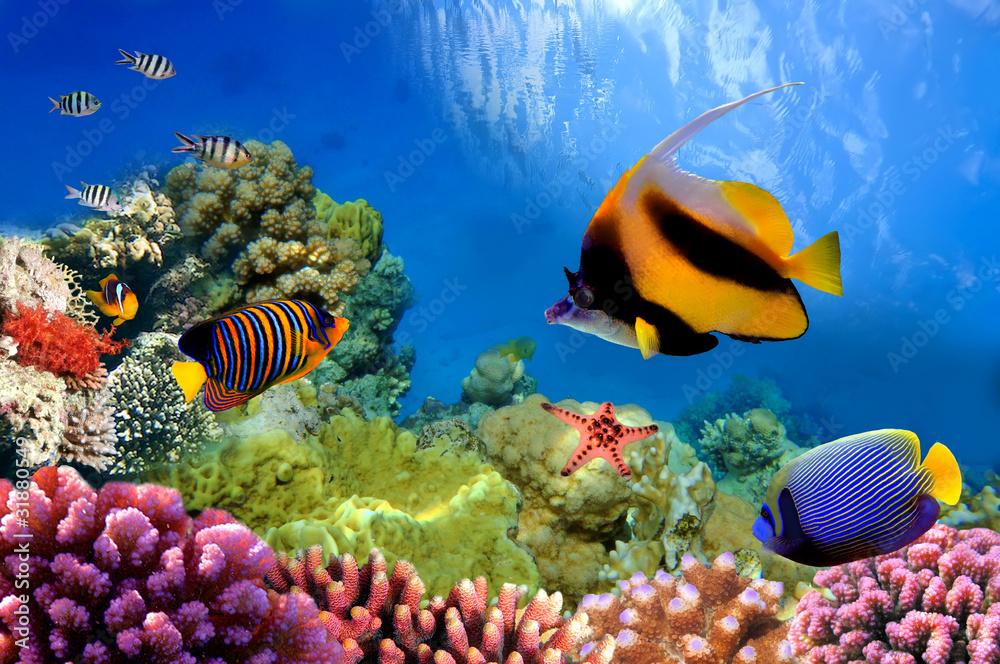 Fototapeta Marine life on the coral reef
