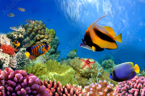 Photo Stands Coral reefs Marine life on the coral reef
