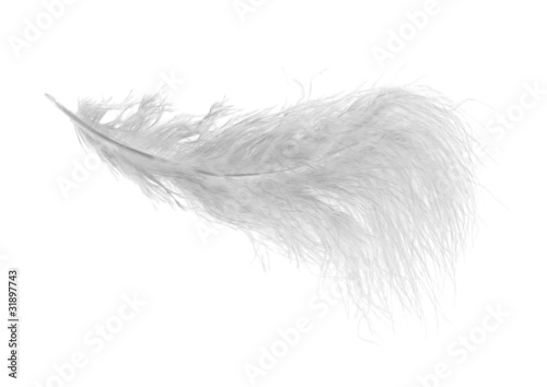 very fluffy white feather