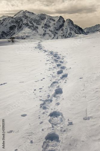 sledz-pod-sniegiem