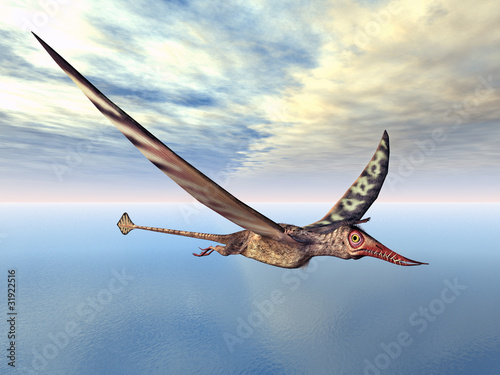 Flugsaurier Rhamphorhynchus Canvas Print
