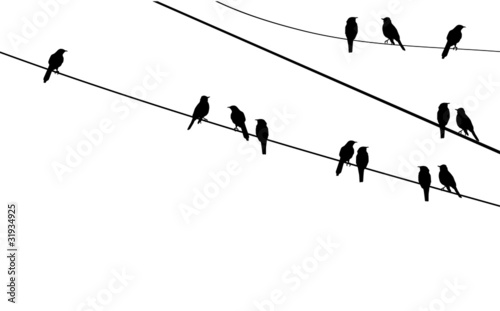 Photo  vector birds on wire