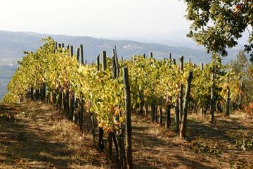 Fototapeta Toskania Tuscan Vinyards