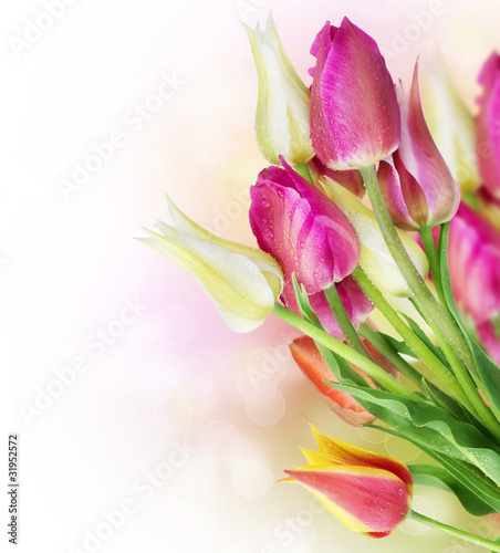 Photo  Spring Tulip Flowers border design
