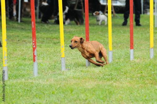 Photo agility dog