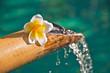 Leinwandbild Motiv Fontaine bambou et fleur de frangipanier