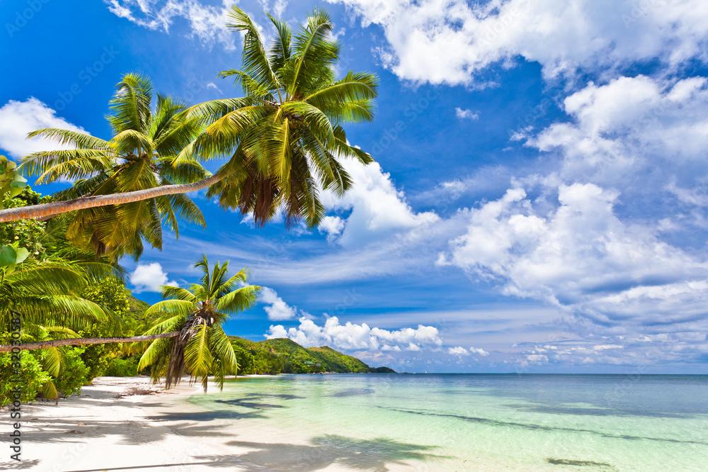 Fototapety, obrazy: Seszele plaża, kokosowe palmy