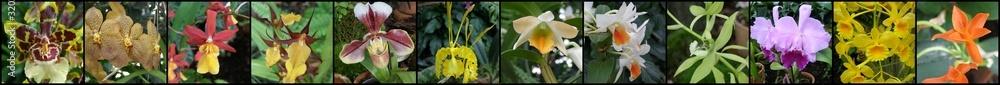 Obraz Orchidee i storczyki fototapeta, plakat