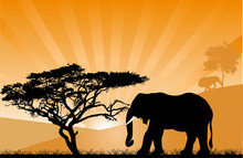 Orange Sunset With Elephant