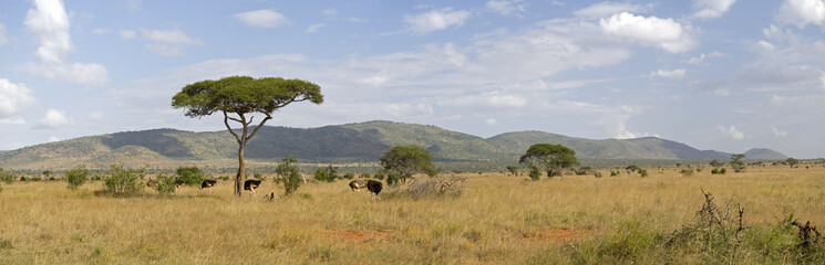 Kenyan savannah