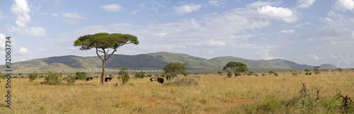 Poster Afrique Kenyan savannah