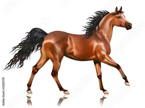 Fototapeta Vector running bay arabian horse obraz