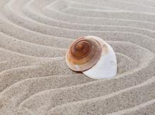 Coquillage Sur Fond De Sable Zen
