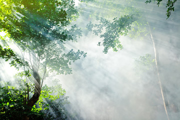 Fototapetabeautiful morning tropical forest sunbeam