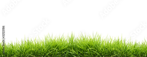 Poster Village fresh spring green grass
