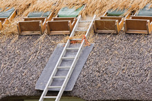 Thatched Roof Renovation