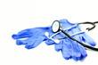 Stethoskop & Handschuhe