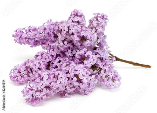 Foto op Canvas Lilac lying twig of lilac