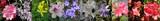 Azalie i rododendrony