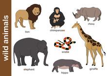 Dzikie Zwierzęta /  Wild Animals