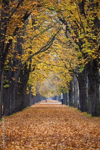 Dekoracja na wymiar jesienny-las-szlak-zaulek-z-joggerem