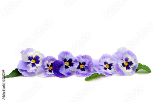 Papiers peints Pansies Pansy border
